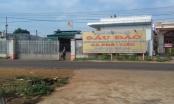 Gia Lai: Doanh nghiệp vỡ nợ, người dân trắng tay