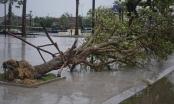 Bão quét qua, cây đổ ngổn ngang, nhiều đường bị ngập