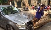 Hà Nội: Cây đổ đè nát đầu xe ô tô cùng 3 xe máy