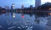 """Chung tay """"cứu"""" hồ ở Hà Nội: """"Bảo tồn di sản, bảo vệ tương lai"""""""