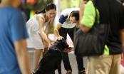 Cấm chó không rọ mõm vào phố đi bộ ở Hà Nội