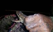 Nghề độc ở Ninh Bình: Săn chão chuộc