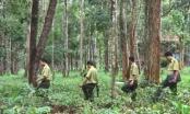 Tăng cường kiểm tra, ngăn chặn phá rừng tại Lâm Đồng
