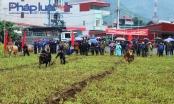 Hà Giang: Khai mạc Lễ hội Bò vàng lần thứ nhất tại huyện Mèo Vạc