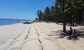 """Bờ biển Cửa Đại """"hồi sinh"""" vì... cát đang trở lại"""