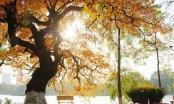Dự báo thời tiết ngày 12/11: Bắc bộ nhiệt độ tăng dần, Hà Nội trưa và chiều hửng nắng
