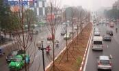 Hà Nội trồng Phong lá đỏ để tạo điểm nhấn trên đường Trần Duy Hưng