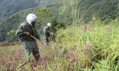 Quy chế hoạt động Cơ quan Thường trực BCĐQG khắc phục hậu quả bom mìn