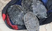Bắc Giang: Bắt đối tượng vận chuyển 26 cá thể rùa trái phép