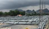 Nhà khung thép hàng trăm tấn đổ sập, 4 công nhân trọng thương