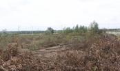 Đồng Nai: Phó Thủ tướng chỉ đạo bồi thường cho dân vụ thu hồi 16ha đất rừng