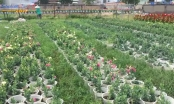 TP HCM: Người trồng hoa tết chạy đua với thời gian vì thời tiết thất thường