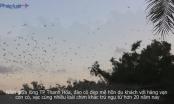 Đẹp mê hồn đảo cò giữa lòng TP Thanh Hóa