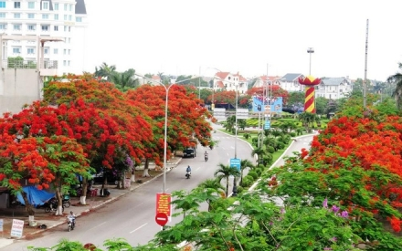 Mãn nhãn con đường hoa phượng đẹp nhất Việt Nam