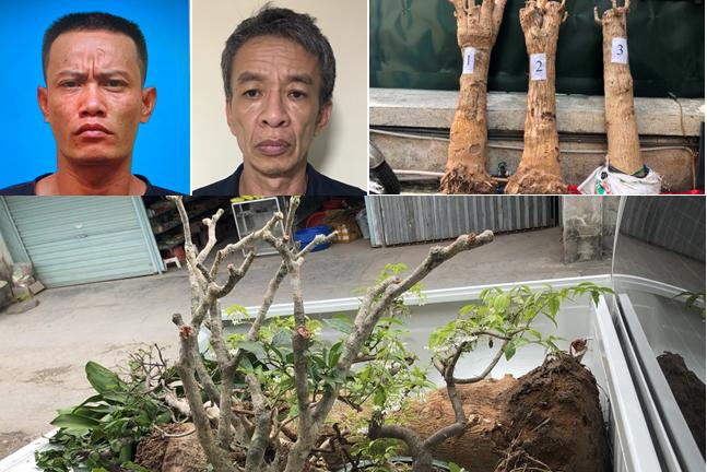 Hải Phòng: Bắt nhóm đối tượng chuyên trộm cắp cây cảnh