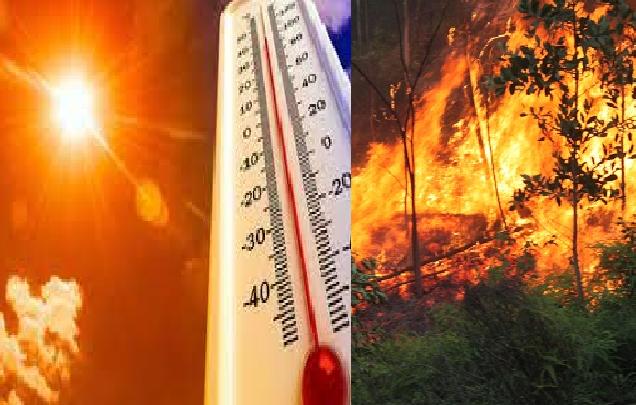 Nắng nóng gay gắt nguy cơ cao cháy rừng ở các tỉnh Trung Bộ