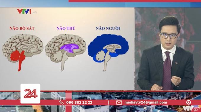 """Văn hóa tranh luận trên mạng xã hội nhìn từ câu chuyện """"não người – não thú"""" của VTV"""