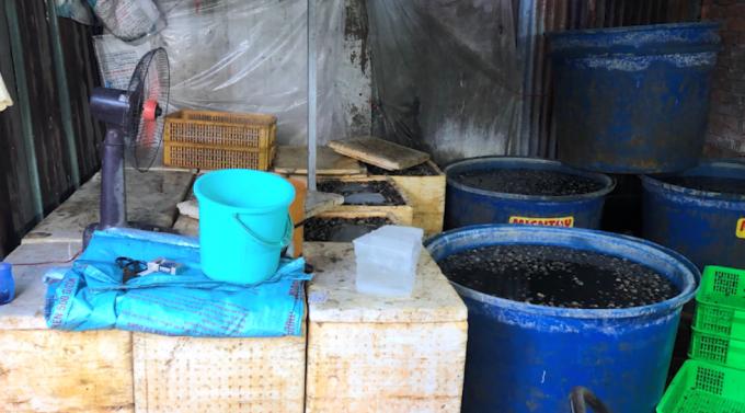TP HCM: Phát hiện 2 cơ sở ngâm thịt ốc bươu với hóa chất công nghiệp