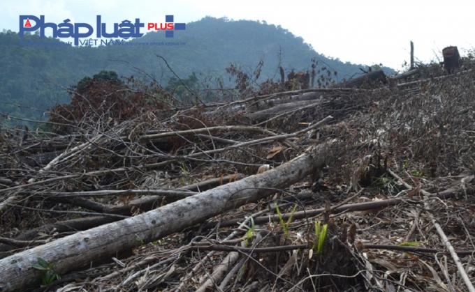 Việc quản lý đất rừng còn lỏng lẻo, khi người dân tranh thủ phát thực bì cũng chặt luôn nhiều cây có đường kính trên 20 cm, dù đã được cơ quan chức năng nhắc nhở, khuyến cáo trước khi nhận đất rừng. Hệ quả, rừng đầu nguồn phòng hộ, chưa từng bị con người tác động đã bị triệt phá.