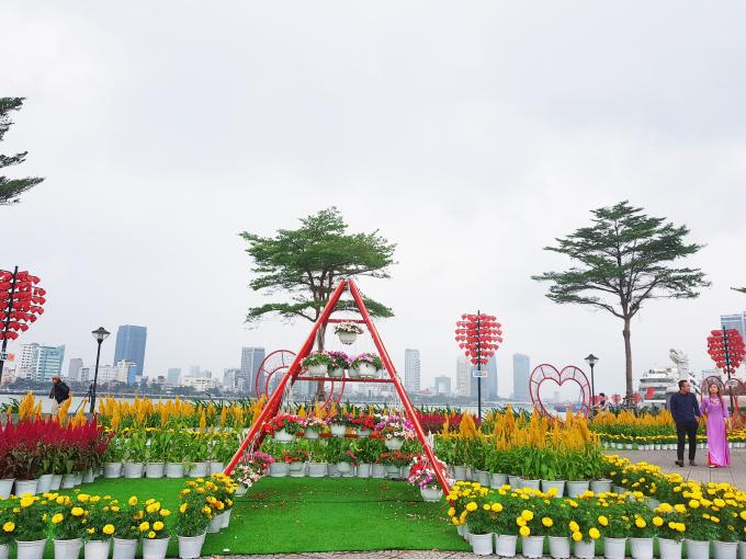 Vườn hoa xuân tô điểm cho TP Đà Nẵng trong những ngày đầu xuân.
