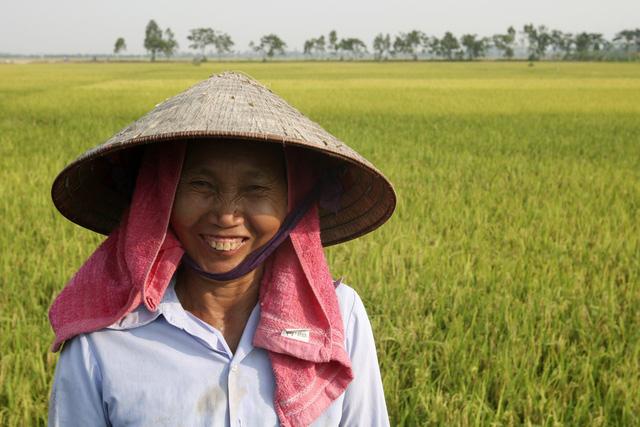Chị là Dương Thị Lương, cả gia đình có 8 khẩu được chia 5 sào ruộng. Chị cho biết năm nay lúa tốt, sản lượng có thể đạt từ 2,5 tạ đến gần 3 tạ mỗi sào.