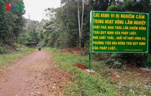 Mặc dù làm công tác bảo vệ rừng nhưng các nhân viên Công ty Lâm nghiệp Đăk Roong đã thiếu hiểu biết về pháp luật trong lĩnh vực bảo vệ rừng.