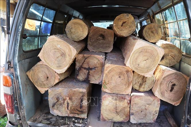 Số lượng gỗ lậu vừa bị Chi cục Kiểm lâm và Công an Tây Ninh bắt giữ.