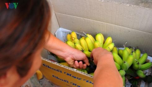 Chuối Ngự Đại Hoàng đã lọt vào top 50 trái cây đặc sản nổi tiếng Việt Nam.