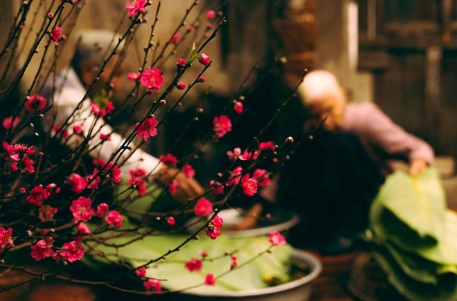 Hoa đào không thể thiếu trong văn hóa Tết của người miền Bắc, ảnh Nguyễn Đình Lâm.