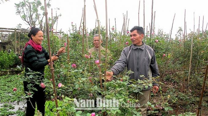 Ông Nguyễn Văn Thành (ngoài cùng, bên phải), xóm Bắc Giang, Thị trấn Cát Thành (Trực Ninh) hướng dẫn người dân trong xóm cắt tỉa hoa hồng. Ảnh: baonamdinh.com.vn.