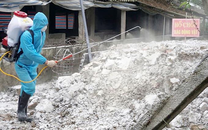 Cán bộ thú y huyện Yên Ðịnh (Thanh Hóa) phun hóa chất tiêu độc, khử trùng chung quanh khu vực chôn lấp lợn bệnh.