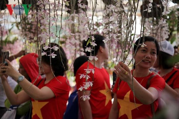 Những cái tên Hoàng thảo trầm, Hoàng thảo kèn, phi điệp... là những loài lan đặc trưng ở Lai Châu