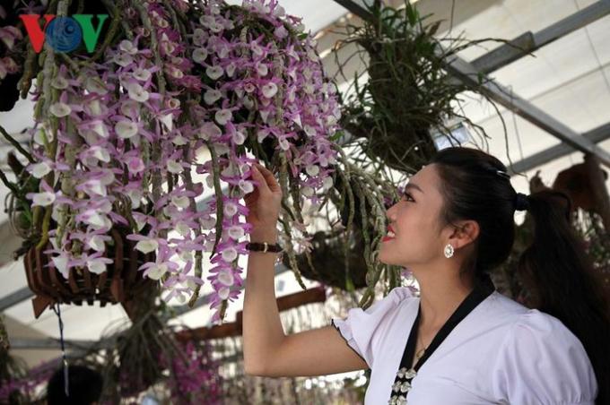 Hoa lan Lai Châu mang vẻ đẹp tự nhiên, với đủ loại màu sắc và được ví như vẻ đẹp của người con gái Thái