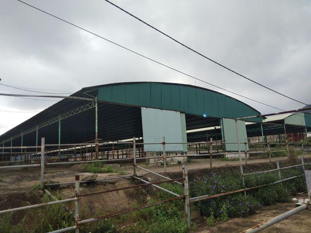 Những chuồng bò rộng lớn bỏ hoang trông thật xót xa.