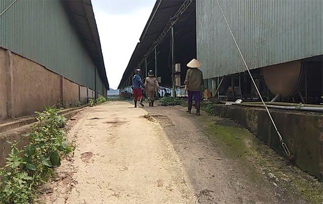 Theo nhiều công nhân ở Công ty chăn nuôi bò Bình Hà, hầu hết công nhân bám trụ ở đây là lao động thời vụ, số khác