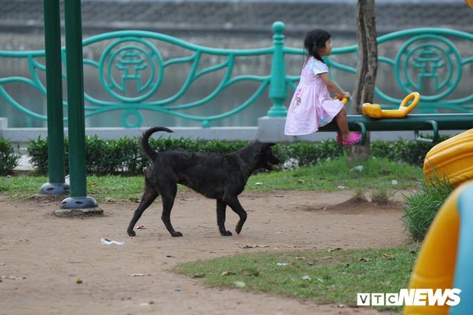 Những em nhỏ thoải mái chơi đùa mà không biết mình có thể bị cắn bất cứ lúc nào bởi những con chó thả rông, không rọ mõm.