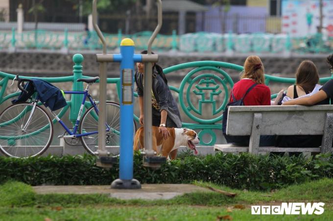 Một con chó giốngPitbull cũng không được rọ mõm, chủ nhân vẫn thoải mái dắt đi dạo nơi đông người.