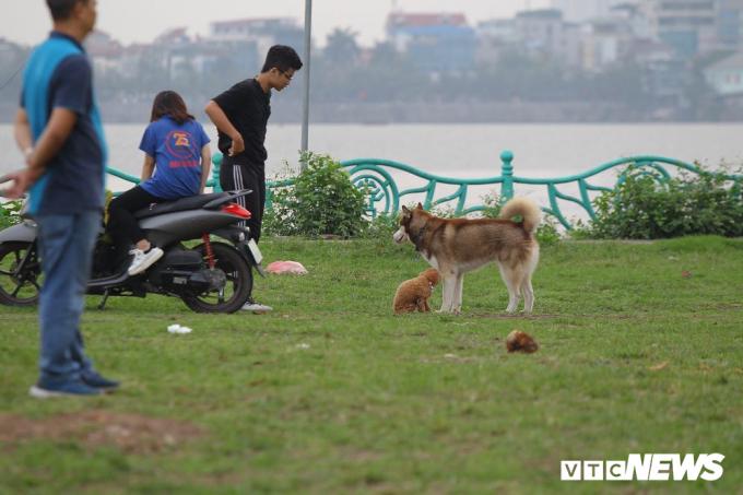Hãi hùng cảnh trẻ em Hà Nội vô tư chơi đùa bên những con chó không rọ mõm
