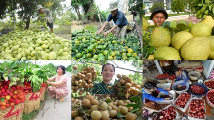 Xây dựng thương hiệu trái cây Việt để khẳng định vị thế nông sản nước nhà. Ảnh minh họa: IT