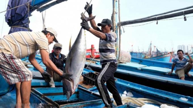 Ngư dân đánh bắt cá ngừ đại dương.