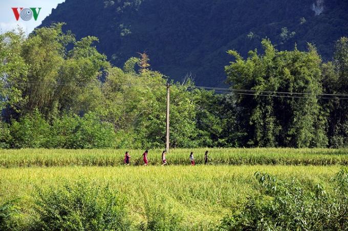Tuy không nổi tiếng như thác Bản Giốc nhưng Phong Nậm lại thu hút rất nhiều nhiếp ảnh gia bởi cảnh đẹp của mùa vàng...