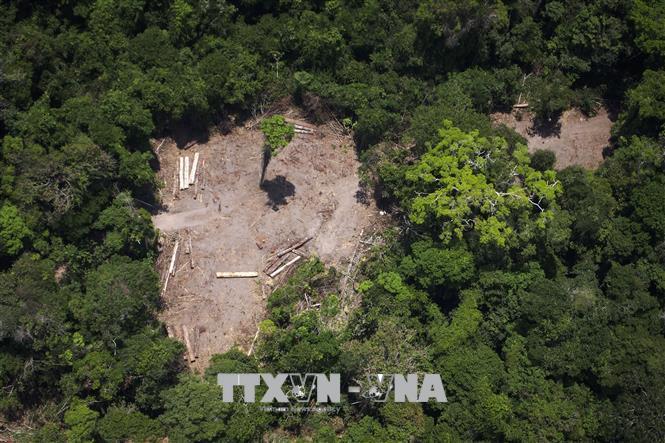 Một khoảng rừng Amazon ở Brazil bị phá hủy do khai thác gỗ trái phép. Ảnh: AFP/TTXVN.