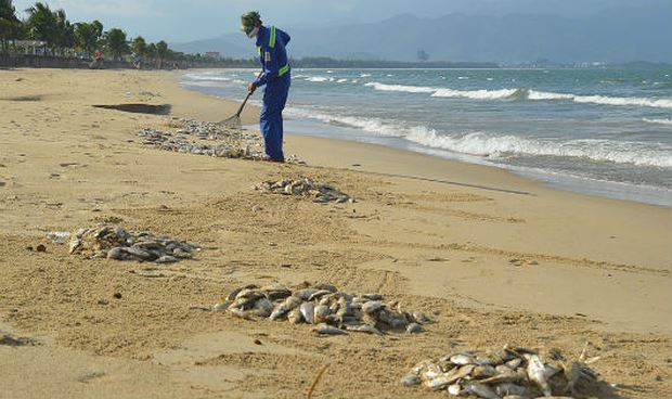 Hiện tượng cá mòi chết trôi dạt vào bờ tại Đà Nẵng.