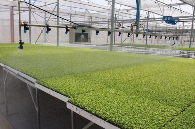 Hệ thống nông trường VinEco cung cấp rau-củ-quả sạch cho VinMart & VinMart+.