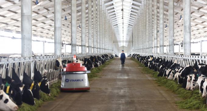 Tổ hợp trang trại công nghệ cao Thống Nhất Thanh Hóa của Vinamilk – trang trại áp dụng công nghệ quản lý đàn hiện đại nhất thế giới hiện nay.