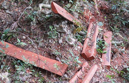 """Một khu vực khai thác gỗ mun của """"lâm tặc"""" như bãi chiến trường."""