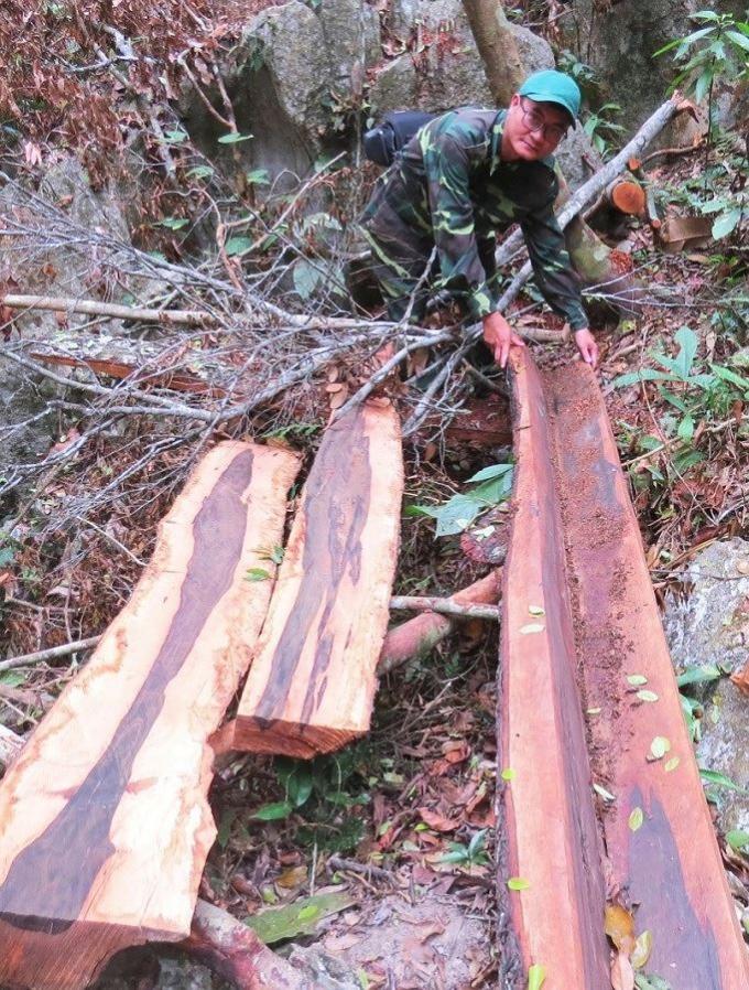 Phóng viên PLVN bên một bãi gỗ khai thác trái phép trong vùng lõi rừng di sản Phong Nha.