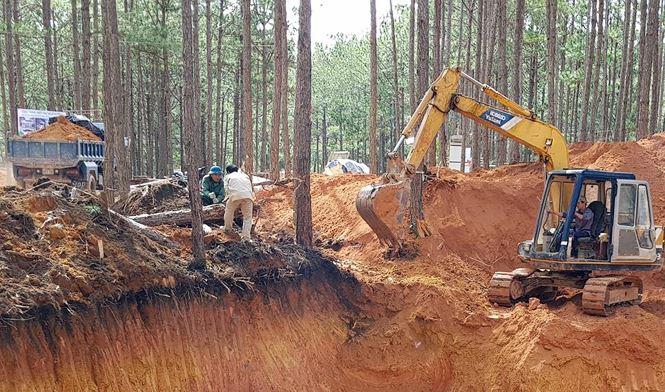 Cưa hạ thông, san gạt đất rừng trái phép.