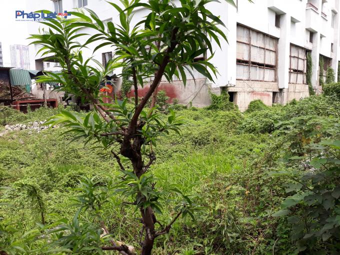 Bên trong dự án cỏ mọc um tùm, cây leo tại tầng 1.