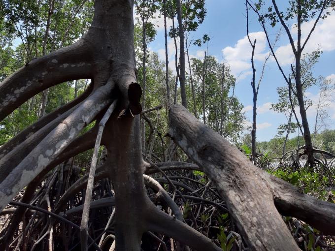 Cây rừng thành